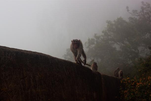 India_travel-23